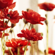 ruby red poppies by Priska  Wettstein