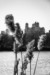 Across the Reservoir by Jon Woodhams