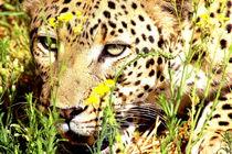 Leopard-afrika-namibia-katze-raubkatze-12
