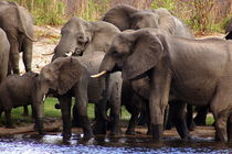 Nambwa-caprivi-kwando-kongola-elefanten-1