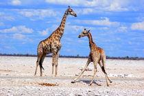 Giraffen-namibia-afrika-1
