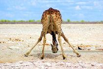 Giraffen-namibia-afrika-2