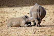 Nashorn-rhino-afrika-3