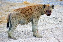 Hyaenen-afrika-namibia-3