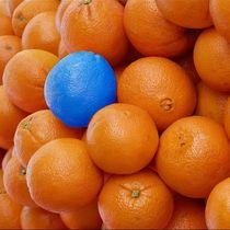funny splash- Orangen by mehrfarbeimleben