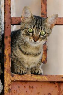 Katzenkind in rostiger Gartentür. Cute kitten on a rusty iron door  by Katho Menden