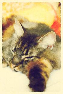 Sleepy Cat by sharandra