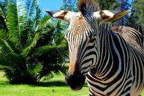 Zebra vor Palmen in Afrika by Eddie Scott