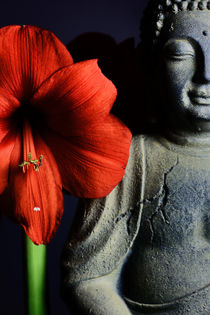 Amaryllis Buddha by Falko Follert