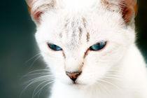 Katze by Jens Berger