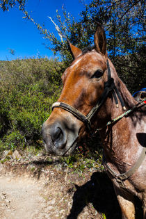 A pack horse ready by Craig Lapsley