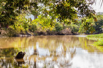 river view in the rainforest by Craig Lapsley