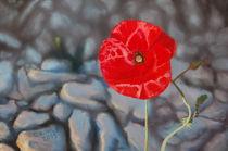 Red Poppy by Oliver  Kohls