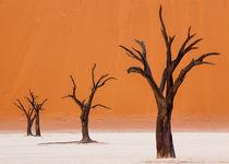 Dancing Trees in Dead Vlei by Matilde Simas