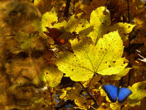 Kaum schau i auf die Uhr, is scho Herbst -When I look at the clock is already autumn- von Wolfgang Pfensig