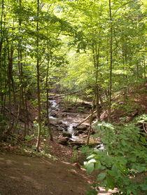 Peaceful Brook by Sabine Cox