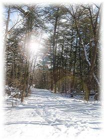 Winter Path by Sabine Cox