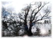 Old Maple in Winter by Sabine Cox