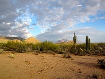 Arizona Desert (1) by Sabine Cox