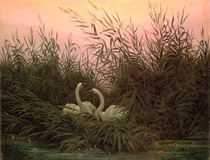 Swans in the Reeds by Caspar David Friedrich