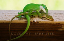 Love at first bite (1) - HAPPY VALENTINES DAY by Thea-Matangi Neumeyer