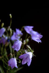 Glockenblumen