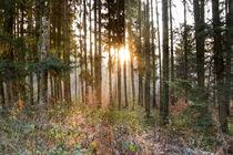 Sonnenaufgang im nebeligen Wald