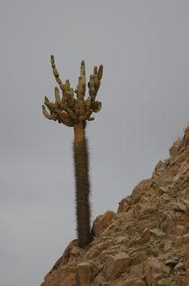 Cactus Candelabro I by Víctor Suárez