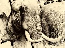 Elefant  von fraenks