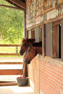 Two horses looking out of a stable by amineah