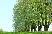 Trees von amineah