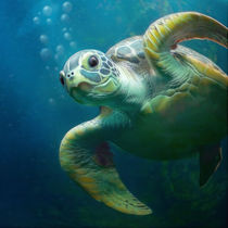 bubbles the cute sea turtle von photoplace