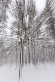 Rathay-kunst-wald-winter-schweden-05