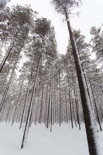 Rathay-kunst-wald-winter-schweden-01