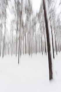 Rathay-kunst-wald-winter-schweden-02