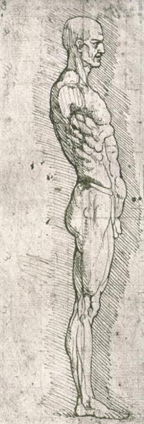 Anatomical Study by Leonardo Da Vinci