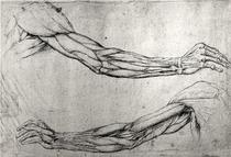 Study of Arms by Leonardo Da Vinci