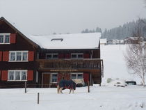Pferd im Schnee by m-i-ma