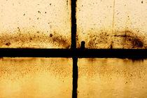 Window by Steve Ball