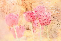 Tulpen von © Ivonne Wentzler