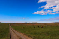 Iceland horses - Islandpferde - Island by Jörg Sobottka