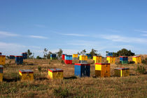 Coloured bee-hives - Chalkidiki - Greece by Jörg Sobottka