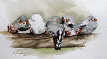 Malen-am-meer-zebrafinken-voegel-aqurarell