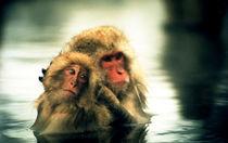 Snow Monkeys by Giorgio Giussani