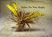 Yellow Fan Wing Mayfly von Doug McRae