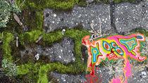 Farbenspiel auf grauen Steinen von Sascha Kolek