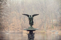 Central Park Angel von tfotodesign