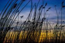 Sonnenuntergang im Schilff by Dennis Stracke