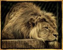 The lion doesn't sleep von Uwe Karmrodt