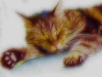 Sleeping cat von Ken Unger